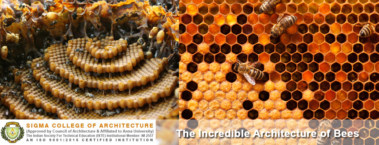 The Incredible Architecture of Bees